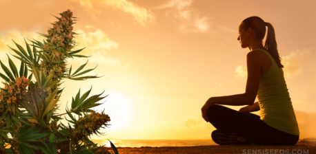 Una mujer se quedó mirando hacia el océano con una planta de cannabis en la esquina