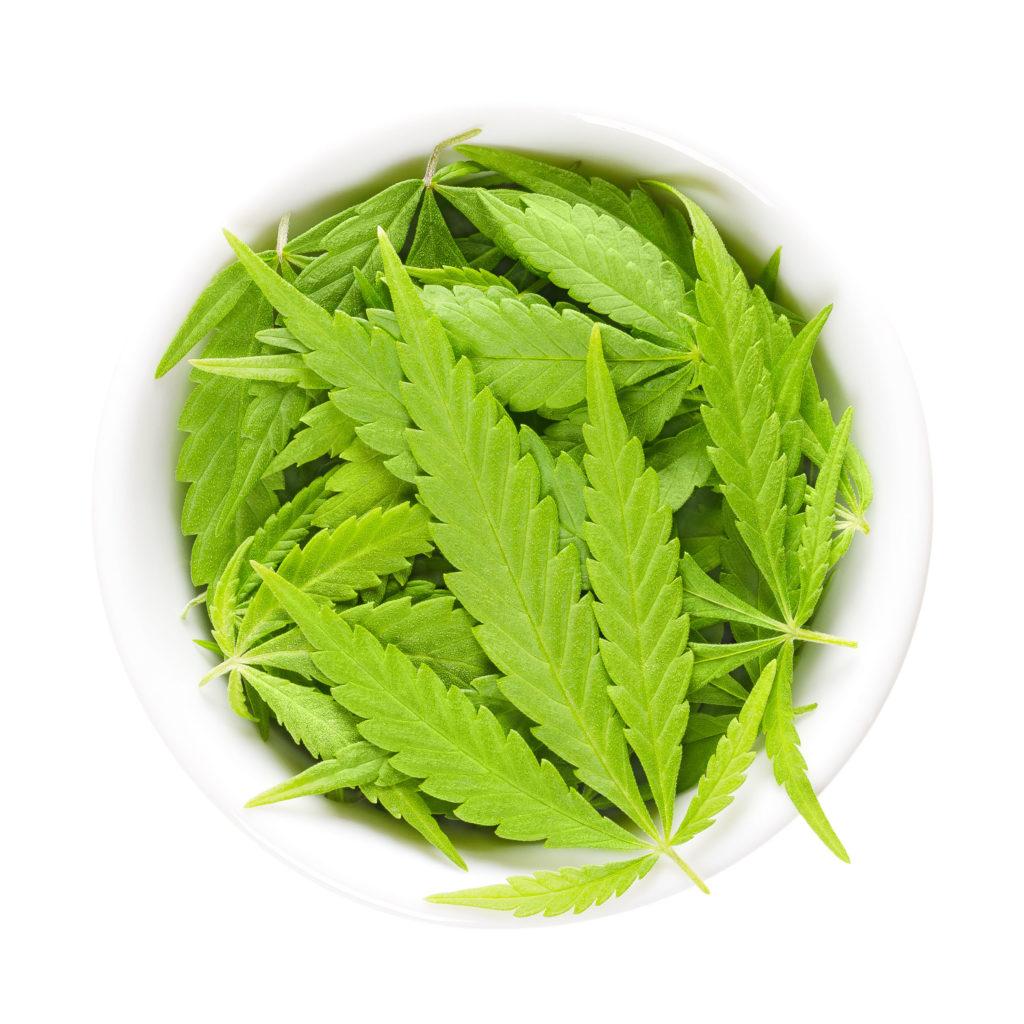 Un bol blanc de feuilles de cannabis crus