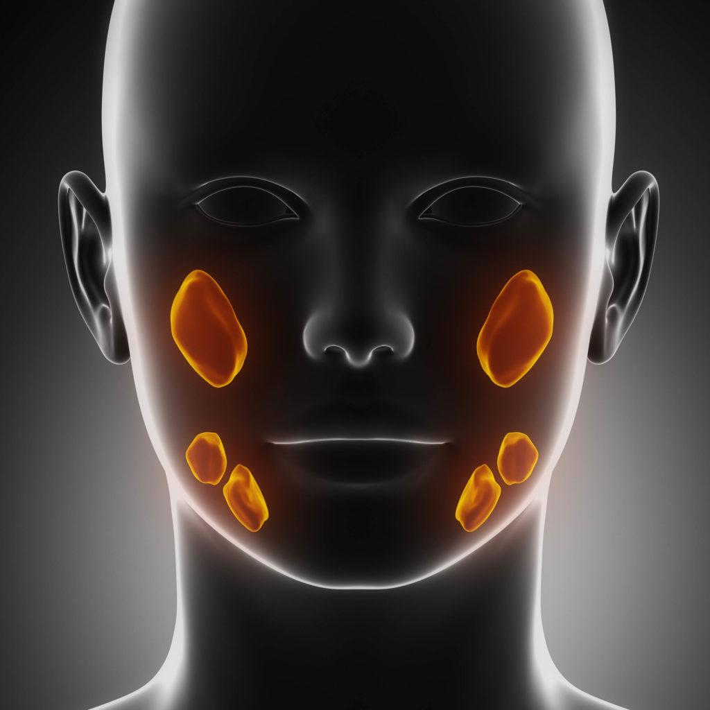 Une tête humaine et les zones qui font de la salive sont soulignées dans l'orange
