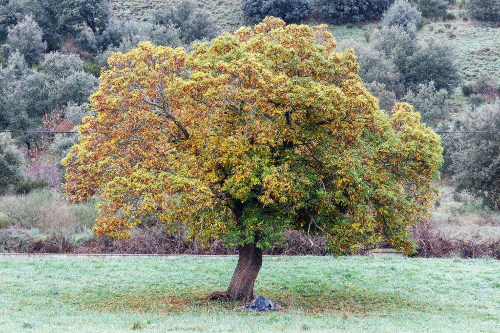 Un árbol con hojas naranjas y verdes en medio de un campo de hierba.