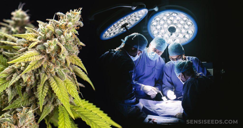 Cuatro médicos realizan una cirugía y una planta de cannabis.
