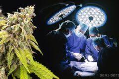 Vier artsen die een operatie en een cannabisplant uitvoeren