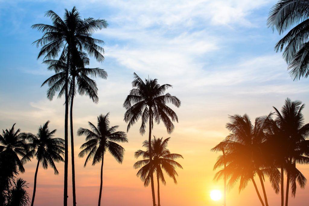 Palmen gegen einen rosa Sonnenuntergang