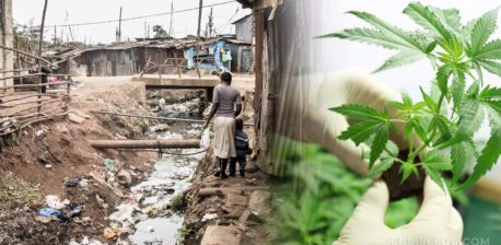 Sewage running through a village and hand holding a small cannabis plant