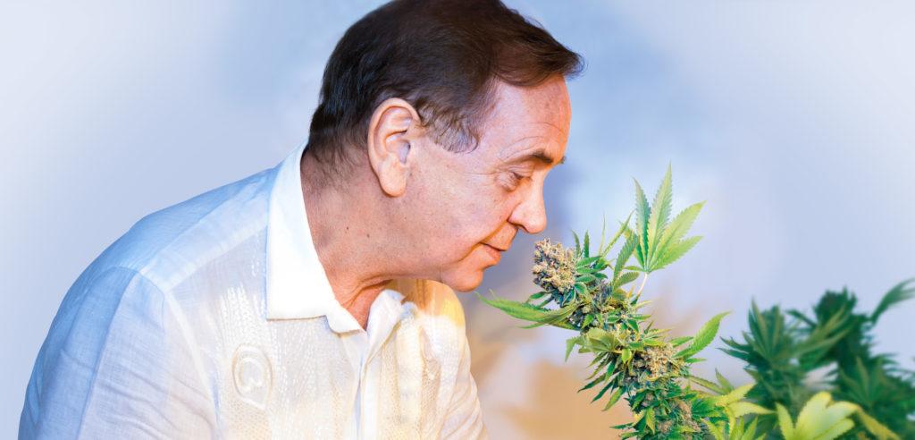 Ben Dronkers sensibilisant une plante de cannabis
