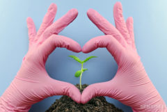Pink gloved hands forming a heart around a small cannabis plant
