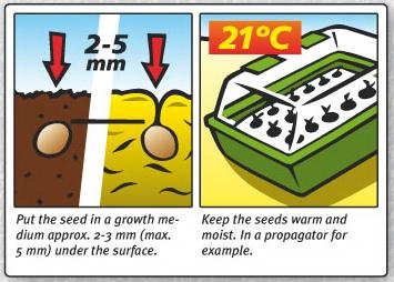 Grafische Darstellung, wie Setzlinge, wenn sie gepflanzt werden sollten