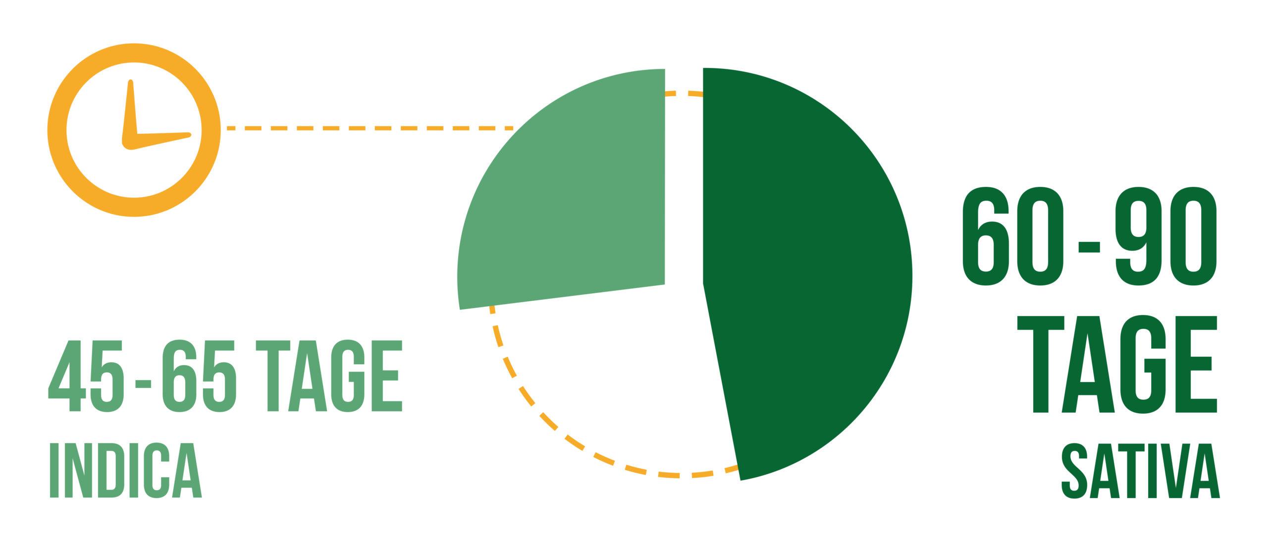 Ein Kreisdiagramm der Trocknungszeit für Sativa und Indica-Knospen