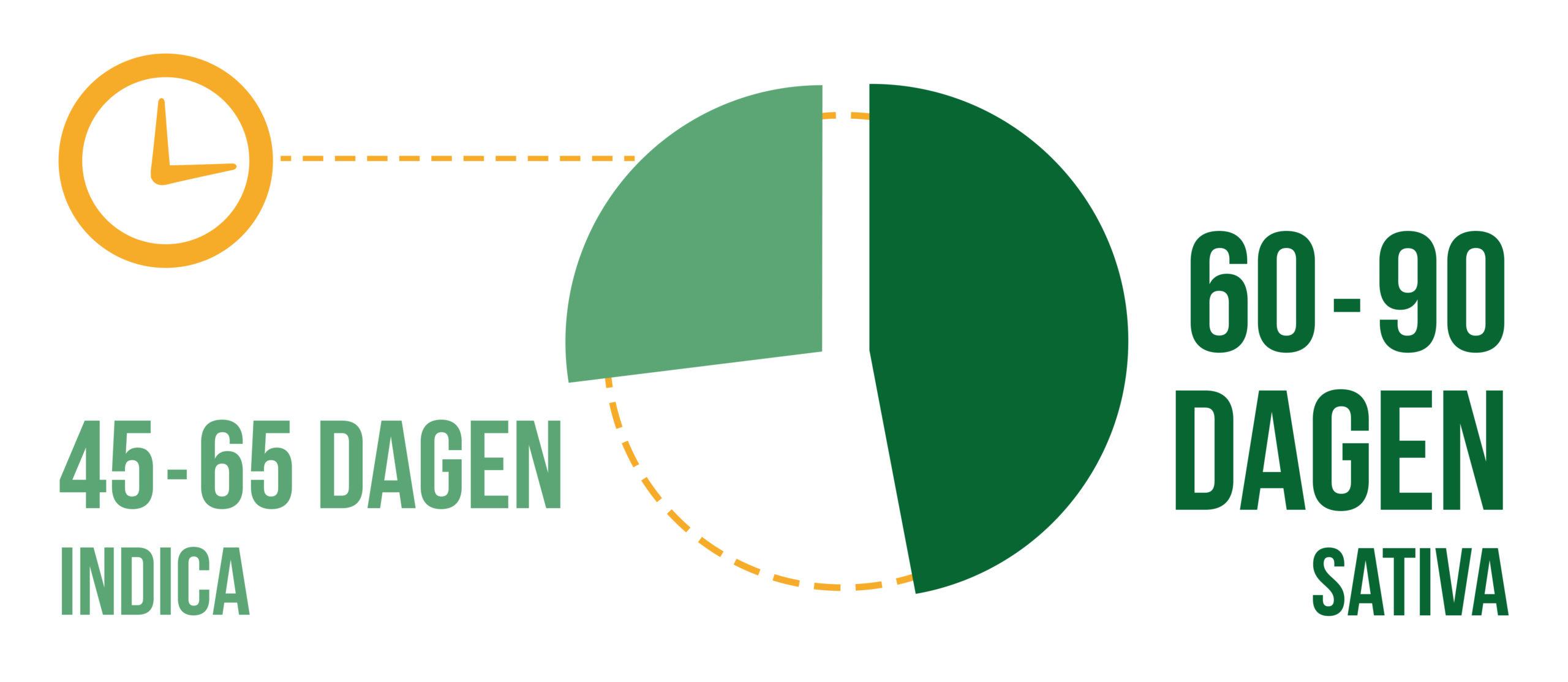 Een cirkeldiagram van droogperiode voor sativa en indica-knoppen