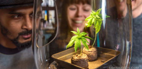 Three people leaning in to look at two small cannabis plants in a glass jar