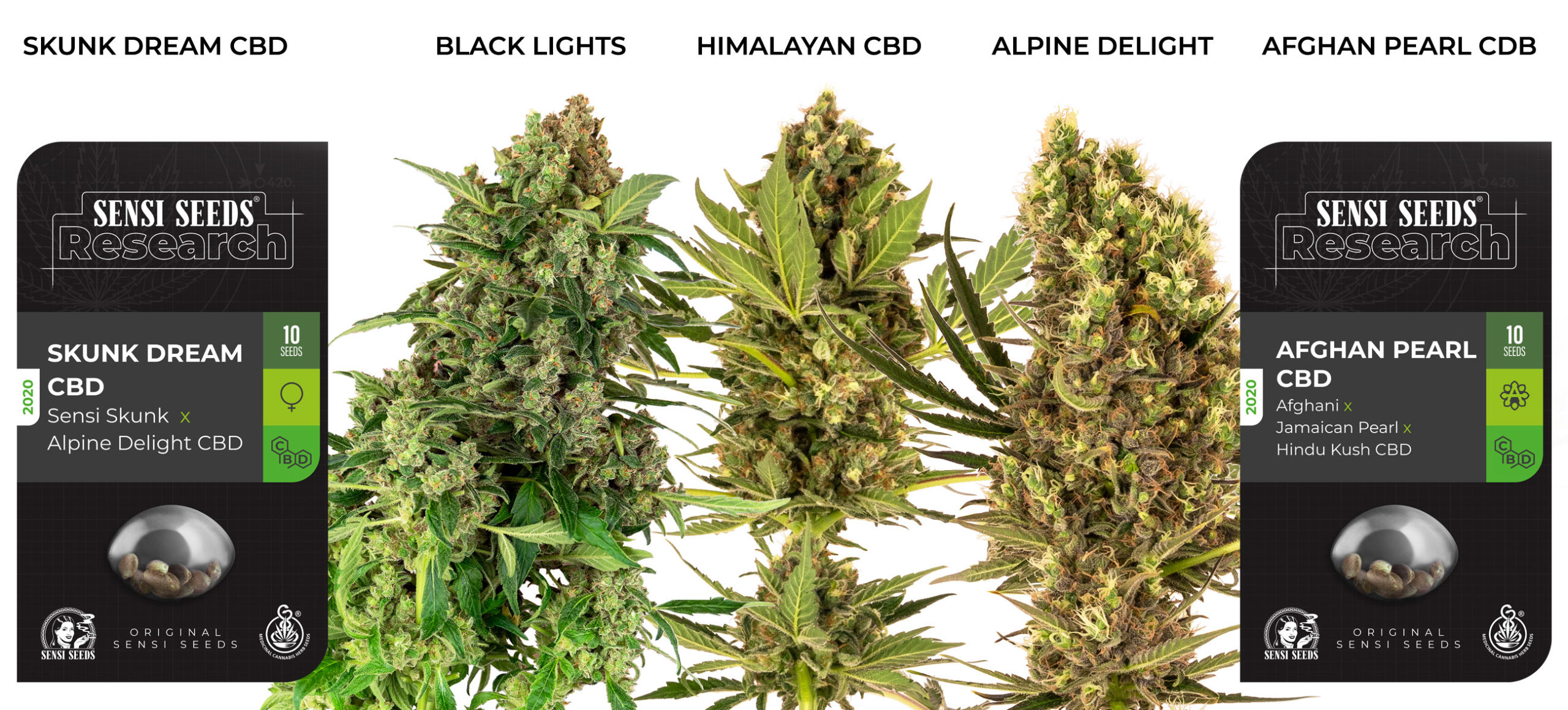 2 confezioni di semi di cannabis (Skunk Dream e Afghan Pearl) + 3 bud (Black Lights, Himalayan e Alpine Delight).