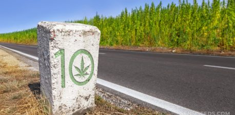 Un lanzamiento de piedra rectangular blanca con un motivo de cannabis tallado en la parte delantera.