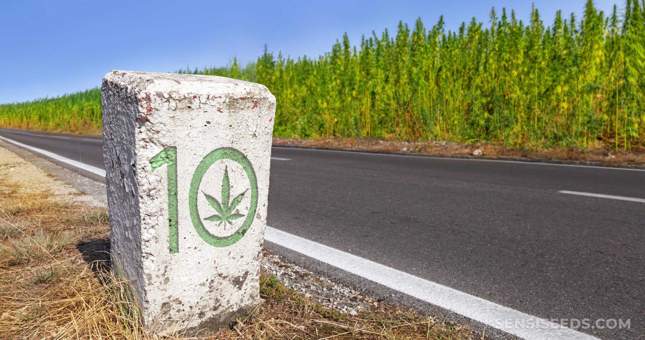 Ein weißer rechteckiger Stein in Schatten mit einem an der Vorderseite geschnitzten Cannabis-Motiv