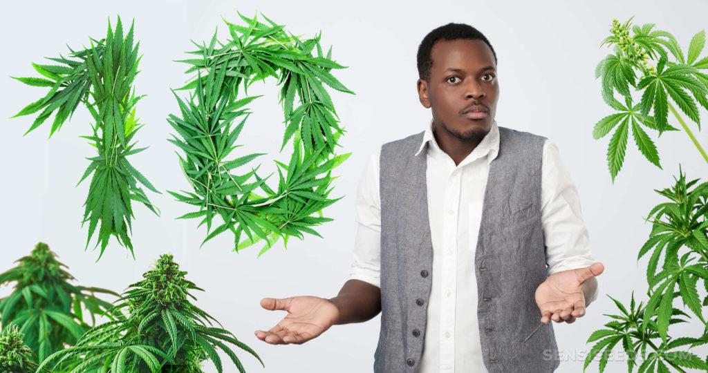 A field of green cannabis plants