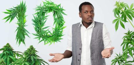 Un campo de plantas de cannabis verde.