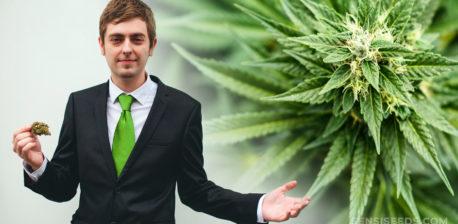 Un hombre en un traje sosteniendo un capullo de cannabis y una planta de cannabis.