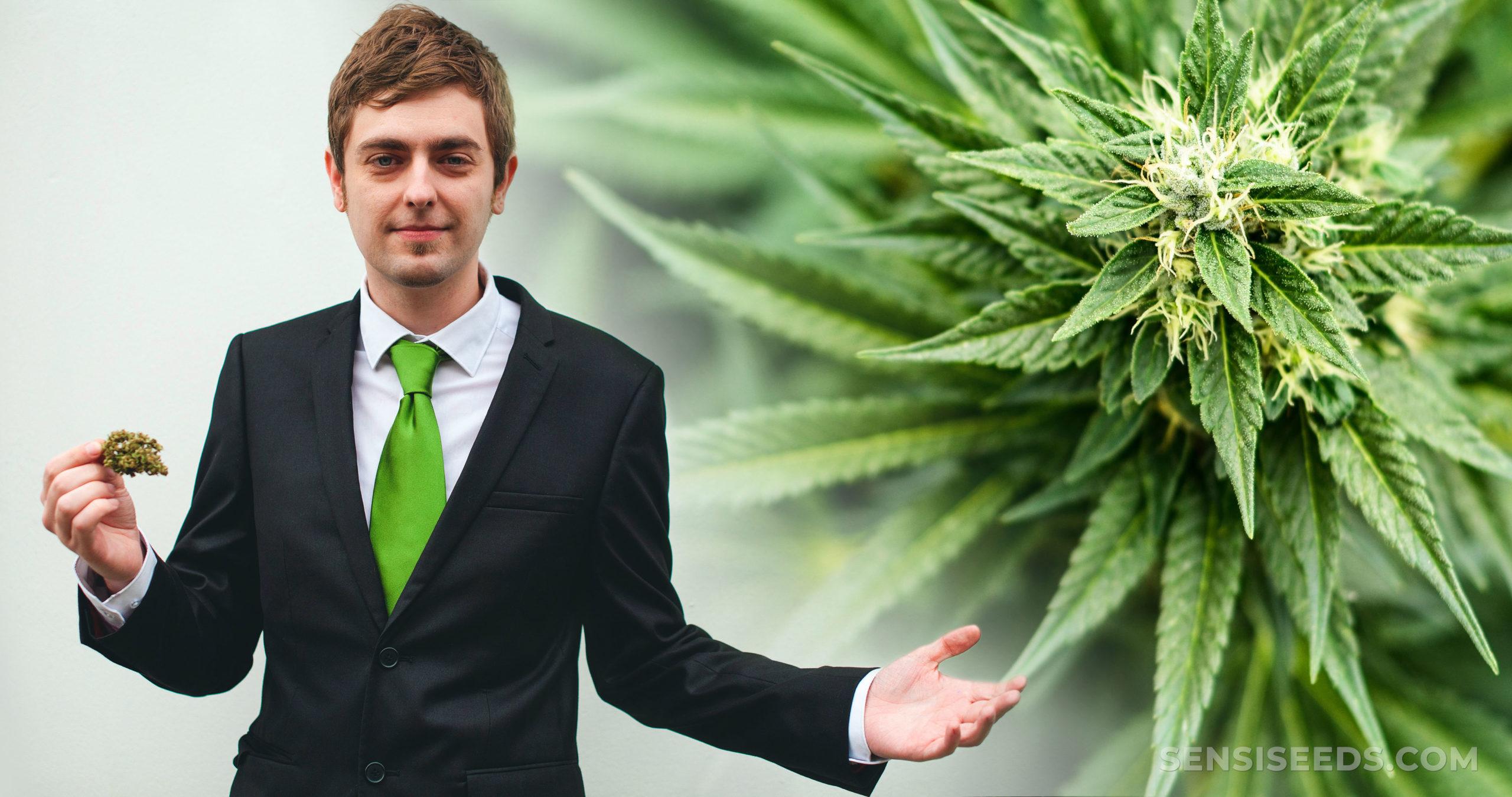 Ein Mann in einem Anzug, der einen Cannabis-Knospen- und Cannabis-Werk hält
