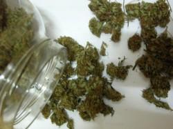 In Spanien wird Cannabis preiswert und in großen Mengen angeboten, er kostet für gewöhnlich rund € 4 pro Gramm (Marihuana Blog)