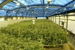grow_room