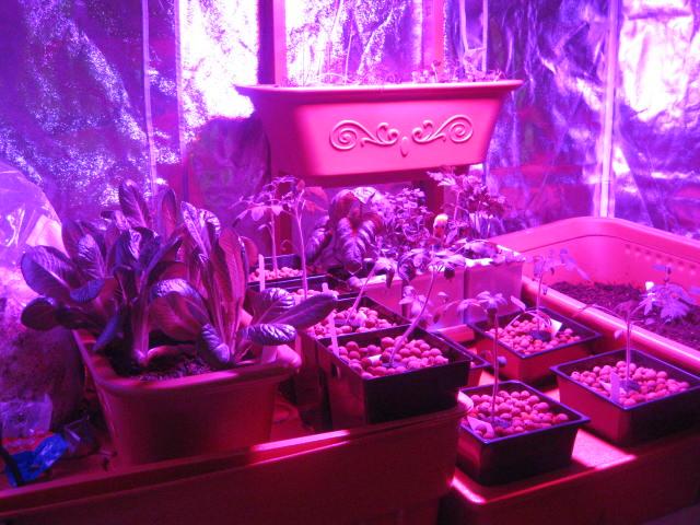 zirkadiane rhythmen bei cannabis. Black Bedroom Furniture Sets. Home Design Ideas
