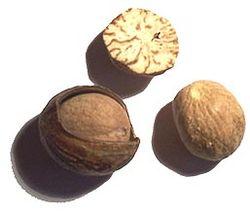 Die Muskatnussfrucht, die das Terpen Myristicin enthält