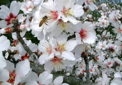 Honigbienen sind lebenswichtige Bestäuber für Pflanzen - Sensi Seeds blog