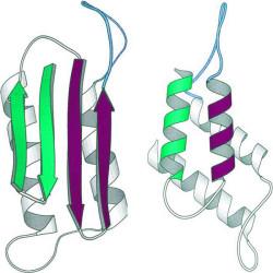 Der reguläre Ablauf der Proteinfaltung kann schon einmal scheitern, und es können sich Prionen bilden (© AJC)