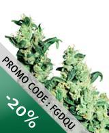 Jack Herer Discount code