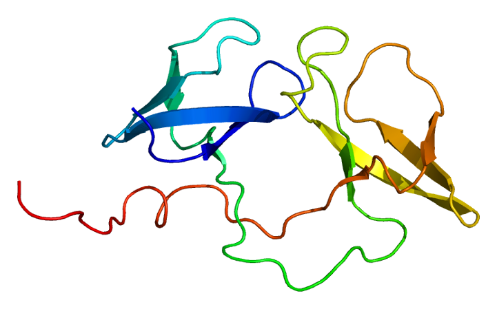 The structure of the FMR1 gene (© EMW Wikimedia Commons)