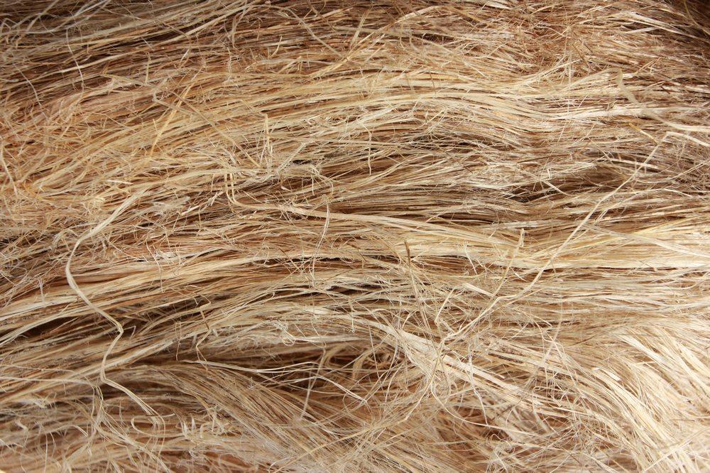 Image result for industrial hemp fiber