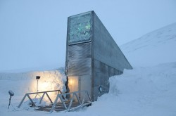 The importance of maintaining seed banks - 2 - The Svalbard Global Seed Vault is a major repository