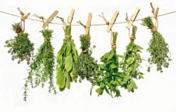 plantas medgrande