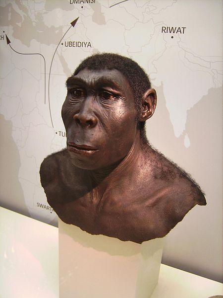 Facial reconstruction - Homo Erectus - Source : Wikipedia