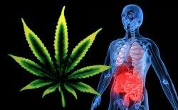 cannabis and crohns disease text