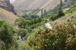 Cannabis in Iran - 4. Tehran Province in northern Iran, with its fertile, mountainous terrain, is a hub of cannabis cultivation (Ninara)