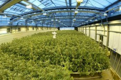 This is what a regulated grow facility could look like.