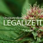 Cannabis in Uruguay: uncertain future
