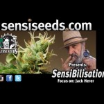 SensiBilisation – Focus on: Jack Herer – reversing global warming