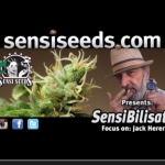 SensiBilisation – Jack Herer: Get the information out there!