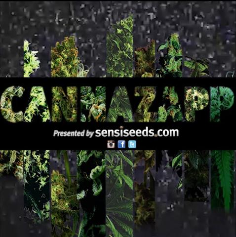 CANNAZAPP_Still5
