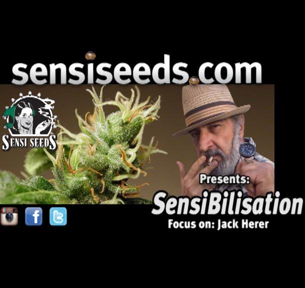 SensiBilisation_JH11