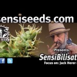 SensiBilisation – Jack Herer: The Emperor Wears No Clothes