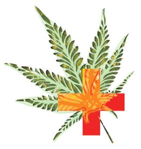 Medicinal cannabis featured image Sensi Seeds blog