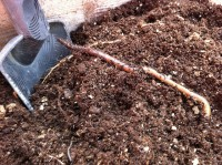 Making sure soil has the right texture and composition is crucial (© abrunvoll)