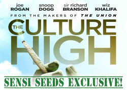 The Culture High – Exclusive footage