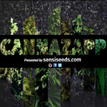 History of cannabis videos - Sensi Seeds blog