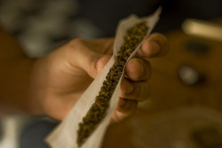 Cannabis, the most consumed illegal substance in Australia.