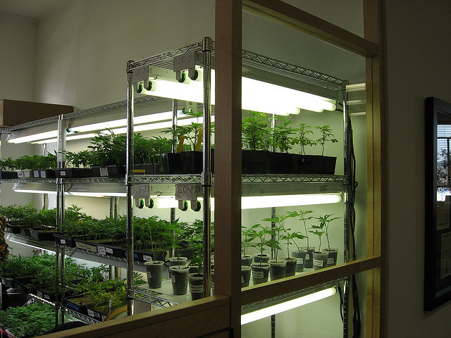 How To Set Up A High Quality Clone Room