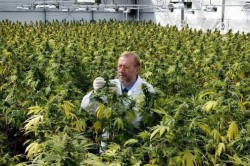2 - The indoor grow operation maintained by GW Pharmaceuticals, UK