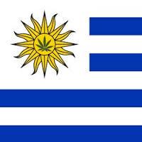 cannabis-uruguay (1)